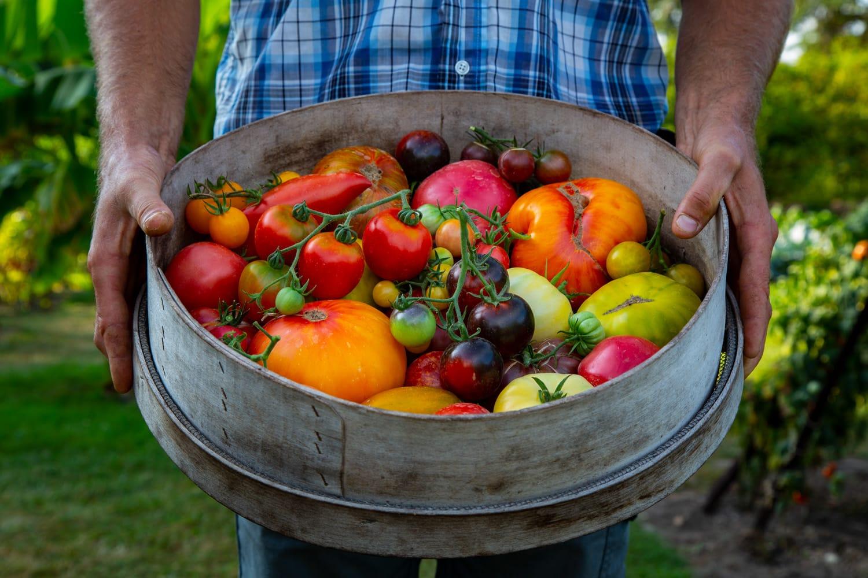 Festival de la tomate et des saveurs - Borja Merino 055